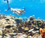 Belize-Barrier-Reef-Snorkeling