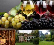 wine day 7