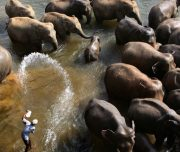 sri-lanka-elephants_23031_600x450