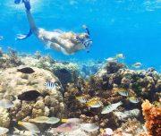 Belize-Barrier-Reef-Snorkeling