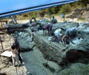 Dmanisi_excavation_site_(2007)